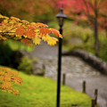 Fall Serenity by Mike Reid