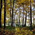 Fall Series 3 by Anita Burgermeister