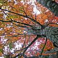 Fall by Shannon Turek
