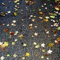 Fall Sparkle by Deborah  Crew-Johnson
