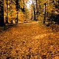 Fall by Stephanie Moore