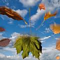 Fall by Steve Gadomski