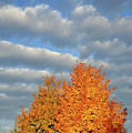 Fall Sunrise On Sugar Maple Along Route 31 by Ray Mathis