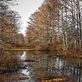 Fall Swamp by Kristopher Bedgood