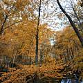 Fall Tees At  Yankee Horse Overlook   by Tom Gari Gallery-Three-Photography