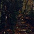 Fall Trail by April Patterson