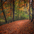 Fall Trail by Larry McMahon