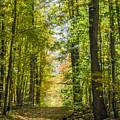 Fall Trail by Richard Kitchen