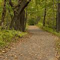 Fall Trail Scene 45 A by John Brueske