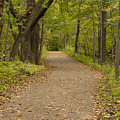 Fall Trail Scene 45 B by John Brueske