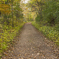 Fall Trail Scene 48 by John Brueske