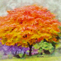 Fall Tree by Greg Collins