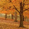 Fall Tree by Henry Fitzthum