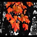 Fall Tree by Karen Scovill