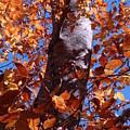 Fall Tree by Mary Halpin