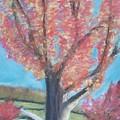 Fall Tree by Sarah Rachel Evans