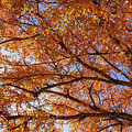 Fall Tree With Star Burst by Tod and Cynthia Grubbs