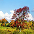 Fall Trees In Country Field by Christina Rollo