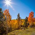 Fall Trees by Jon Manjeot