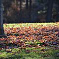 Fall by Valerie Zebroski