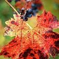 Fall Vine by Lori Leigh