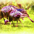 Fall Wild Turkey by Barry Jones