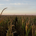 Fall Wind Fields V by Dylan Punke