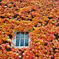 Fall Window by Lindy Pollard