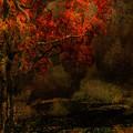 Fall Woods by Jeff Burgess