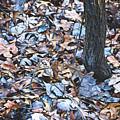 Fallen #1 by Patti Schulze