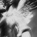 Fallen Angel Vertical by Tony Rubino