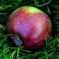 Fallen Apple by Valerie Ornstein