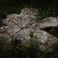 Fallen But Not Forgotten by Joanne Marshall