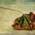 Fallen Down In Summer by Jutta Maria Pusl