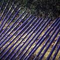 Fallen Fence by Garry Gay