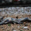 Fallen by Hans Kool
