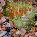 Fallen Leaf by Brenda Alcorn
