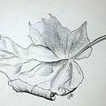 Fallen Leaf by J R Seymour