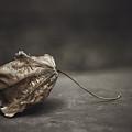 Fallen Leaf by Scott Norris
