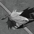 Fallen Leaf by Yavor Kanchev