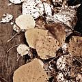 Fallen Leaves by Barbara MacFerrin