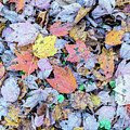 Fallen Leaves by Cris Ritchie