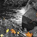 Fallen Leaves by David Quist