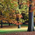 Fallen Leaves II by June Marie Sobrito
