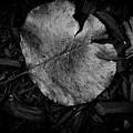 Fallen Leaves by Jonas Ogrefoln
