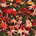 Fallen Leaves by Nadia Asfar