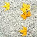 Fallen Leaves by Nato Lobzhanidze