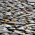 Fallen Leaves On A Street At Autumn by Lasse Ansaharju