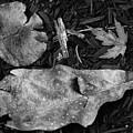 Fallen Leaves Revisited by Jonas Ogrefoln