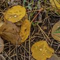 Fallen Leaves by Tony Baca